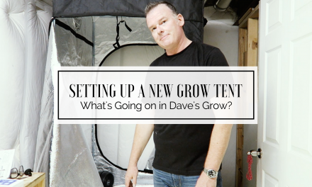 What's Going On In Dave's Grow? – Let's Set Up A Tent!