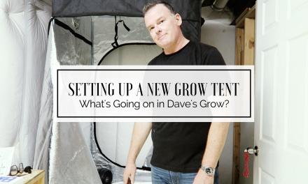 What's Going On In Dave's Grow? – Let's Set Up A Tent!