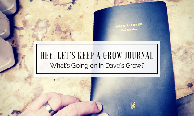 What's Going on in Dave's Grow? | Let's Keep a Grow Journal