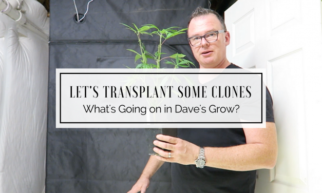 What's Going on in Dave's Grow? – Let's Transplant Clones!