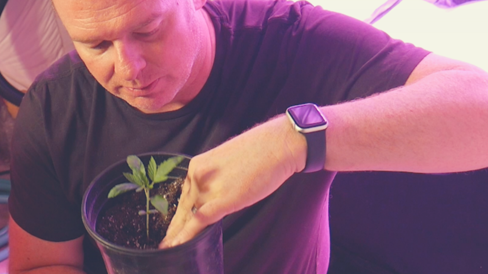 Now You've Got Seedlings | What's Going On in Dave's Grow?
