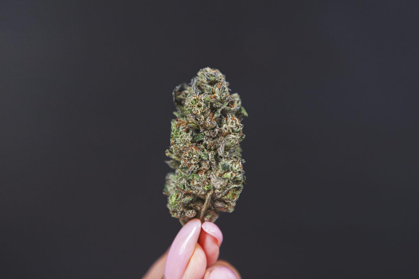 Gelato Cannabis Strain Review